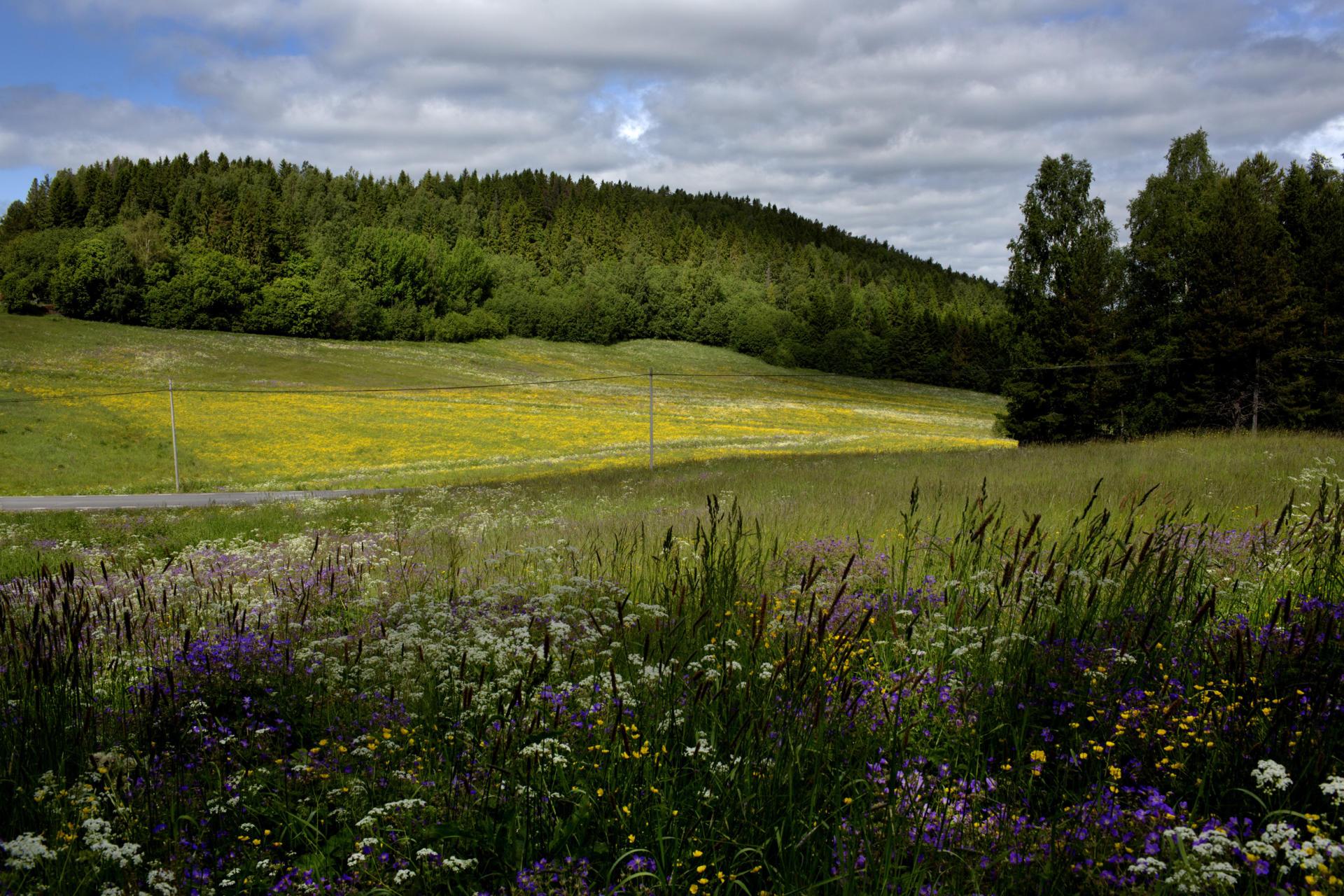 Le long des routes, les fleurs sauvages envahissent les champs.