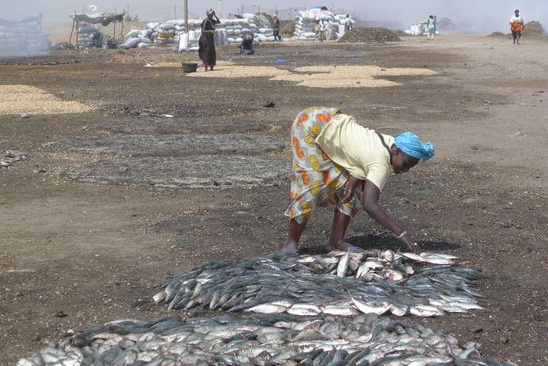 A Bargny, plus d'un millier de femmes participent au fumage des poissons qui sont ensuite exportés dans toute l'Afrique de l'Ouest.