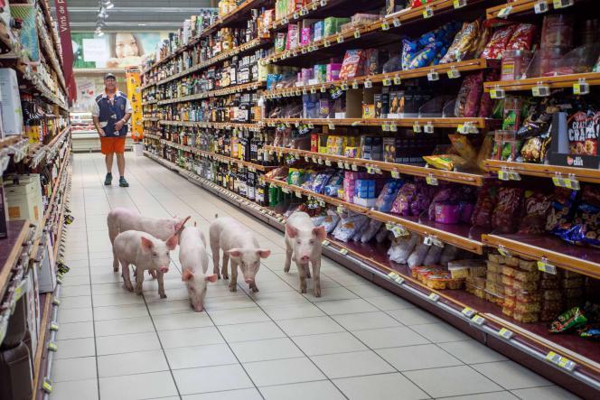 Des porcelets lâchés dans un supermarché de Sarlat lors d'une action d'éleveurs le 20 août 2015.