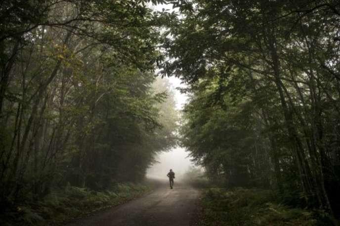 Une forêt à Saint-Pierre-de-Bressieux (Isère). AFP PHOTO / JEFF PACHOUD