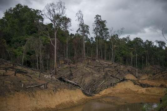 Plus de 18 millions d'hectares de forêts auraient été perdus en 2014, selon les données de l'université du Maryland, aux Etats-Unis, et de Google, publiées le 2 septembre par la plate-forme Global Forest Watch.