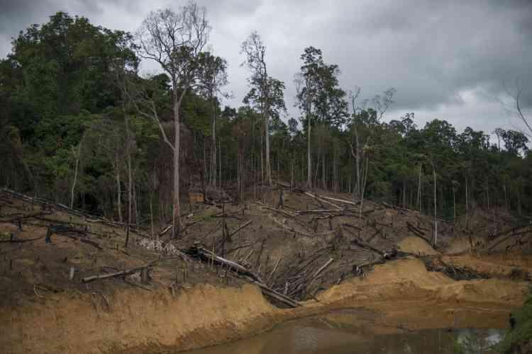 """Des arbres ont été coupés pour laisser place à la culture du """"Jhum"""", l'équivalent de l'agriculture sur brulis. La propriété des terres est collective, ce qui a compliqué les procédures d'acquisition des terrains avant la construction de la route. Des contentieux sont toujours en cours entre paysans et autorités."""