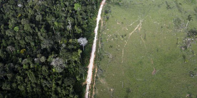 Vue aérienne de la forêt amazonienne dont l'une des parties a été déforestée illégalement, le 25 mai 2012 près du parc national d'Itaituba, au Brésil.