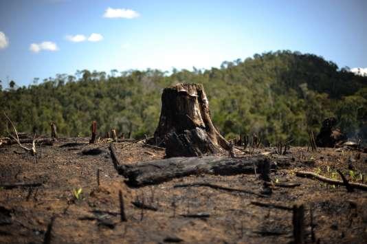 La région d'Andasibe (sud-ouest de Madagascar), ici en septembre 2008, souffre elle aussi de déforestation.