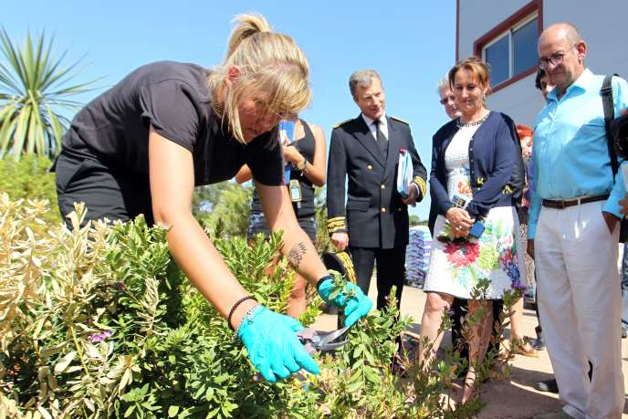 Segolène Royal observe une scientifique prélevant un échantillon sur une plante suspectée d'être infectée par Xylella Fastidiosa, près de Porto Vecchio en Corse le 21 août 2015.