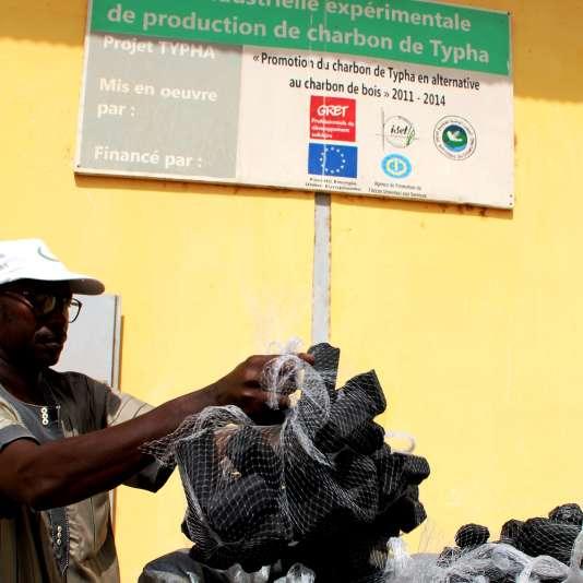 Le Typha est séché, puis carbonisé pour devenir de la poussière de charbon qui sera mélangée avec de l'argile puis pressée et agglomérée sous forme de briquettes prêtes à la vente.
