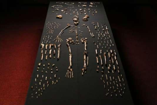 La nouvelle espèce a été baptisée «Homo naledi» et classée dans le genre Homo, auquel appartient l'homme moderne.