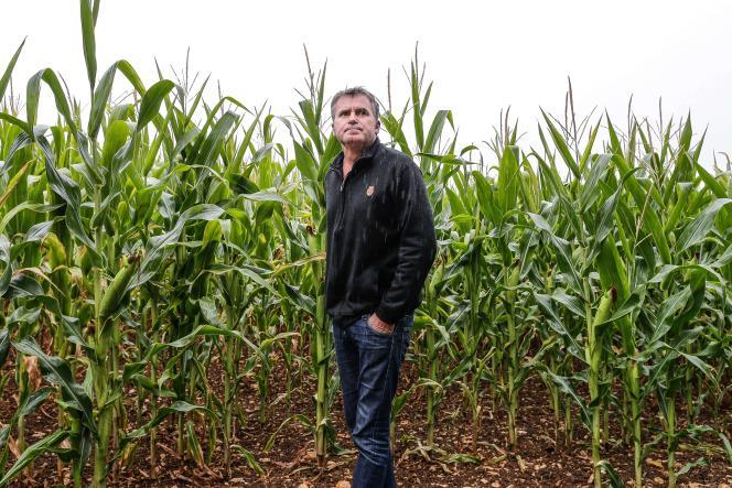 L'agriculteur Paul François dans un de ses champs de maïs à Bernac (Charente), le 28 juillet.