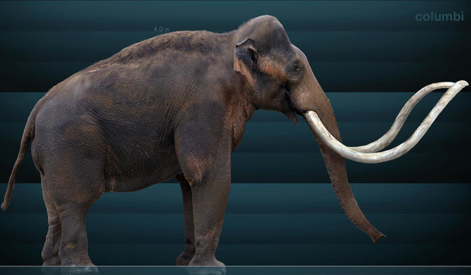 Reconstitution d'un mammouth colombien.