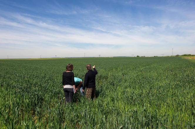 Des champs irrigués au goutte-à-goutte à Pas-de-jeu, près de Thouars, dans les Deux-Sèvres, en mai 2014.