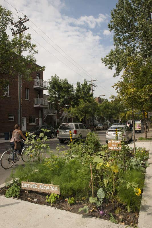 """Le """"jardinet des mal-aimées"""" à Rosemont-La Petite-Patrie à Montréal."""