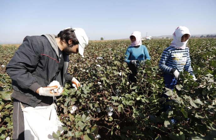 De réfugiés syriens travaillent dans un champ de coton à la frontière turquo-syrienne près de Bukulmez en Turquie en novembre 2012.