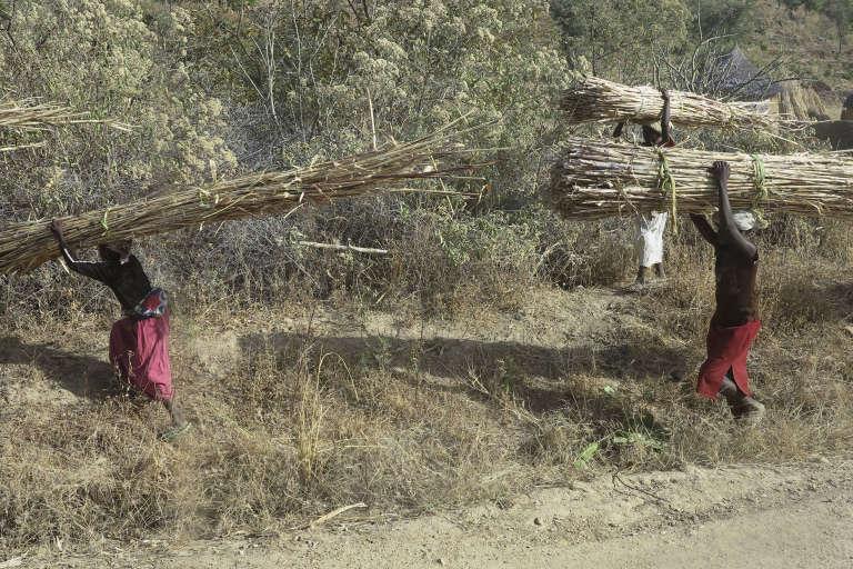 Des habitants de Mabass, dans la nord du Cameroun, transportant du mil. Février 2015.