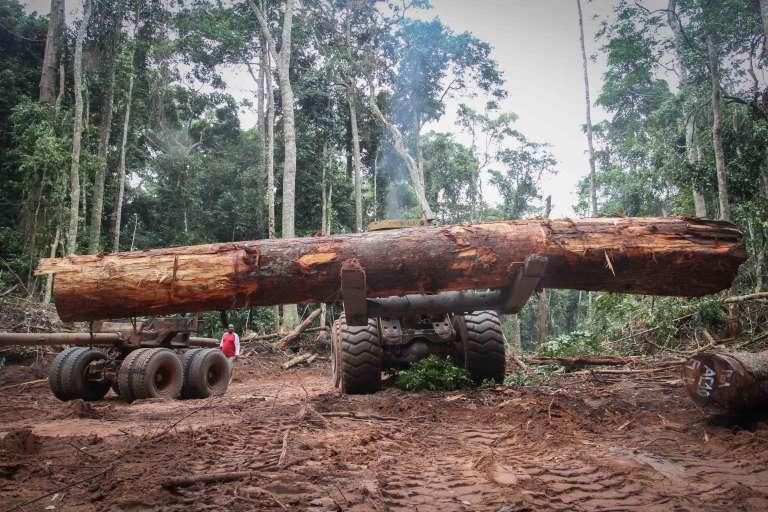Exploitation forestière dans le sud-ouest de la Centrafrique, région de Mambéré