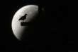 Au Vatican, la silhouette d'une mouette sur fond d'éclipse de Lune,  dans la nuit du 28 septembre.
