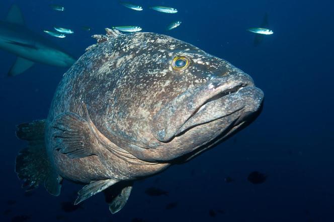 «Cette décision replace la Nouvelle-Zélande à l'avant-garde mondiale du combat pour la préservation des océans», a déclaré le directeur de WWF en Nouvelle-Zélande, Chris Howe.