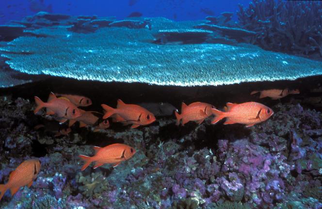 Le récif de Baker Island dans le Pacific Remote Islands Marine National Monument, au large d'Hawaï.