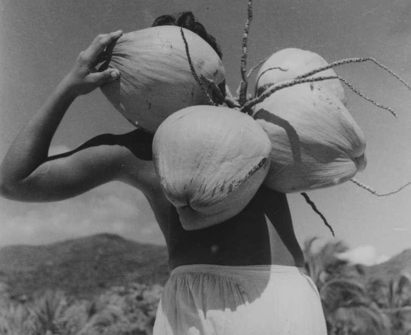 """""""Cette photographie est extraite d'une publication consacrée à Acapulco. Il s'agit pour Lola de répondre à une commande destinée à vanter les mérites de ce qui va devenir, sur la côte Pacifique, l'une des plus importantes destinations touristiques. Acapulco restera longtemps synonyme d'un site aux couleurs et de lumières idylliques. Sans doute ces noix de coco participent-elles de la mise en valeur de la luxuriance de la végétation. Lola s'attache à construire sa composition en s'appuyant sur les formes et la lumière."""""""