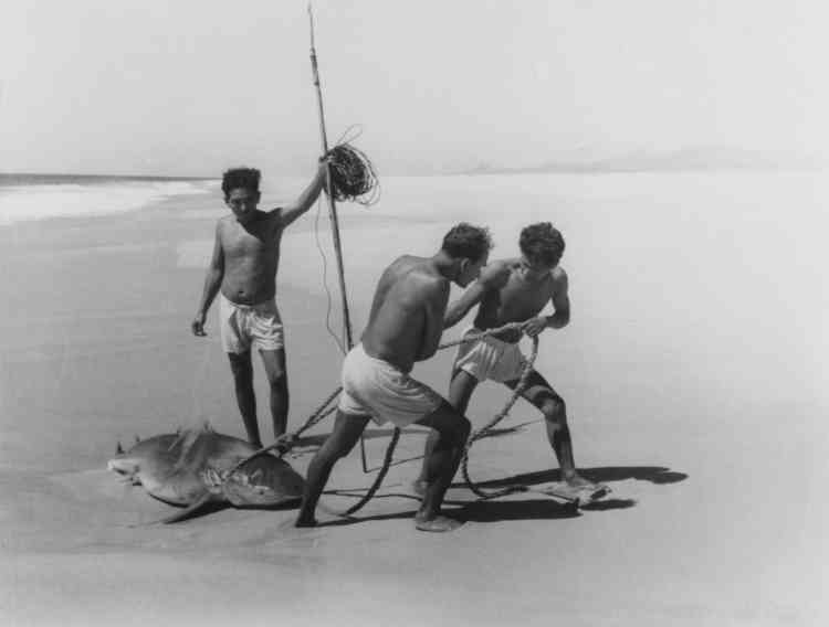 """""""Lorsque l'on détaille cette photographie, on découvre vite que tout est très organisé : les gestes qui disent l'effort pour traîner le requin, la répartition des tâches dans le travail, la verticalité du harpon tenu par l'un des pêcheurs et qui croise presque à angle droit l'horizon. L'espace de la plage est totalement dégagé, la lumière fait naître sur le sable des ombres qui enrichissent la composition. Bref, la magie de l'instant qui rapproche cette image d'une perfection visuelle tant du point de vue de la forme que du sens."""""""