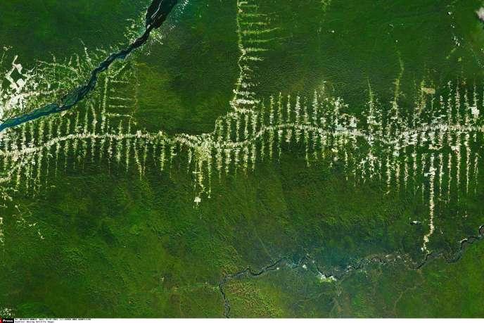 La destruction de la forêt amazonienne au Brésil (image satellite sélectionnée sur Google Earth par l'artiste Benjamin Grant).