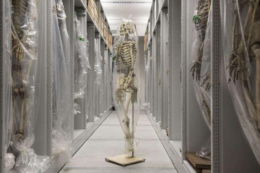 Au musée de l'homme, la réserve des squelettes.