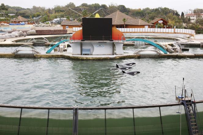 Des orques du Marineland d'Antibes, fortement endommagé par les intempéries du début du mois d'octobre sur la Côte d'Azur.