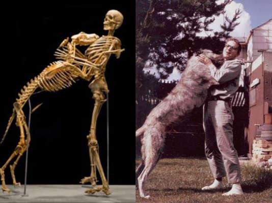 L'anthropologue américain Grover Krantz, avec son chien.
