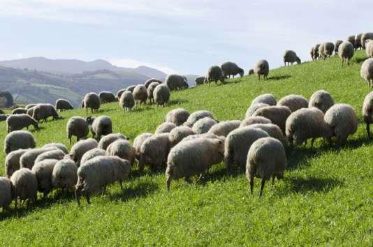 Au Pays Basque, la Fromagerie des Aldudes cherche à lever  600 000 euros auprès des internautes. De plus en plus de producteurs passent par le crowdfunding pour se financer. Des sites s'en sont fait une spécialité.