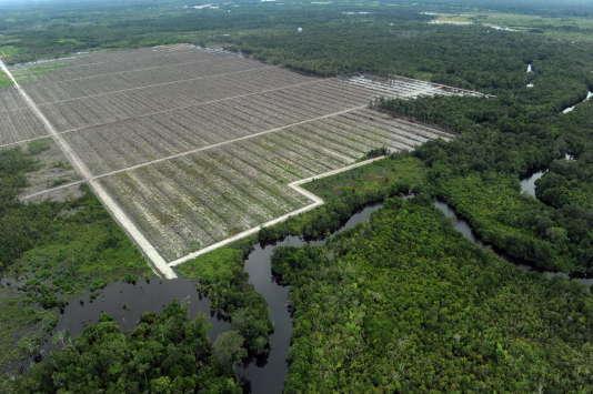 Exploitation produisant de l'huile de palme, sur l'île de Bornéo, en Indonésie.