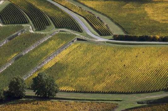 Des vignes dans la région de Bordeaux, le 24 octobre.