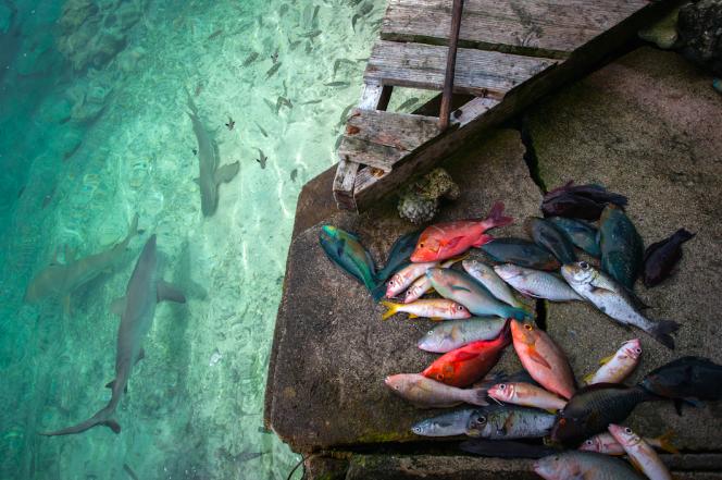 Dans lesÎles Tuamotu, enPolynésie française, en 2015.