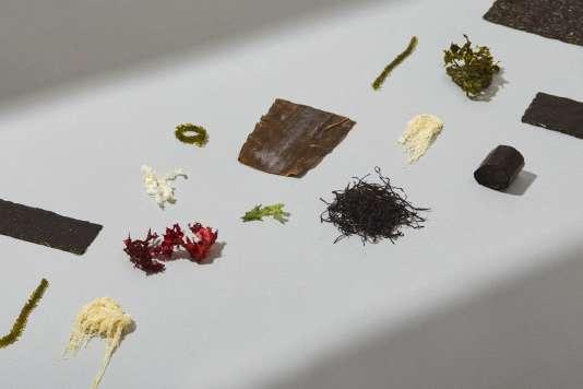 145 espèces d'algues sont consommées dans le monde ; 24 sont autorisées en France.