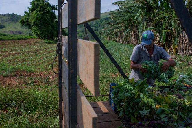 David Ralitera dans sa ferme près de Sao Paolo, qu'il exploite sans produits chimiques, le 12octobre.