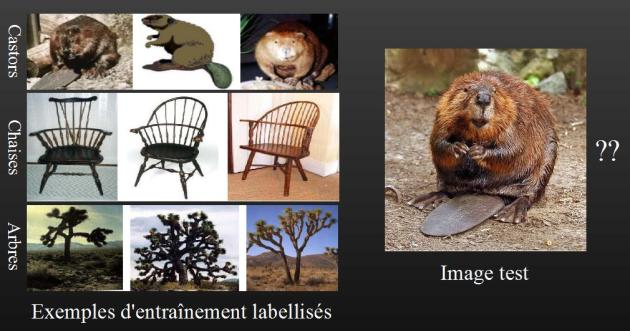 Pour reconnaître un castor, le programme est « entraîné » avec de nombreuses photos de l'animal, avant d'être capable de le détecter sur de nouvelles images.