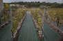 A la station viticole Pech Rouge de l'INRA , des scientifiques observent  les incidences du réchauffement climatique sur les vignes.