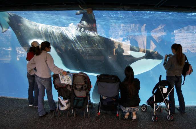 Au parc de SeaWorld de San Diego, en Californie, en 2006.