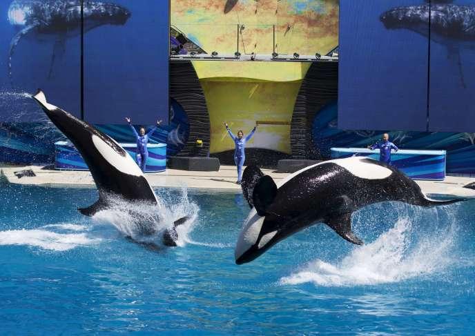 Spectacle d'orques au parc d'attractions aquatiques SeaWorld de San Diego, le 19mars 2014.