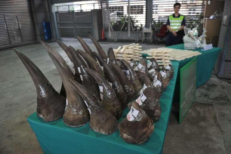 Cornes de rhinocéros et bijoux en ivoire récupérés par les douanes de Hongkong, en novembre 2011.