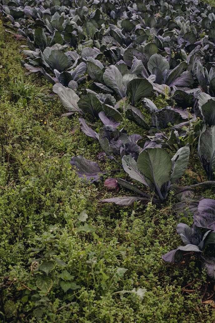 Afin de fertiliser naturellement la terre, aucun sol n'est laissé à nu dans la ferme de Tolhurst Organic, qui cultive dans l'Oxfordshire des produits certifiés bio végétaliens.