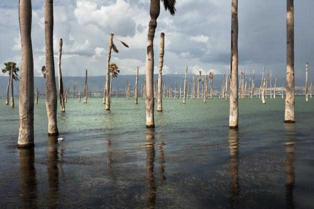 Haïti, lac Azuei, 2015. L'expansion du lac Azuei est sans précédent : sa superficie a presque doublé en dix ans, submergeant et détruisant les habitations et les exploitations agricoles. Ne demeure que quelques arbres fantômes. Les experts attribuent ce phénomène au changement climatique: les pluies sont ces dernières années plus abondantes dans la région, à cause du réchauffement de la mer des Caraïbes.