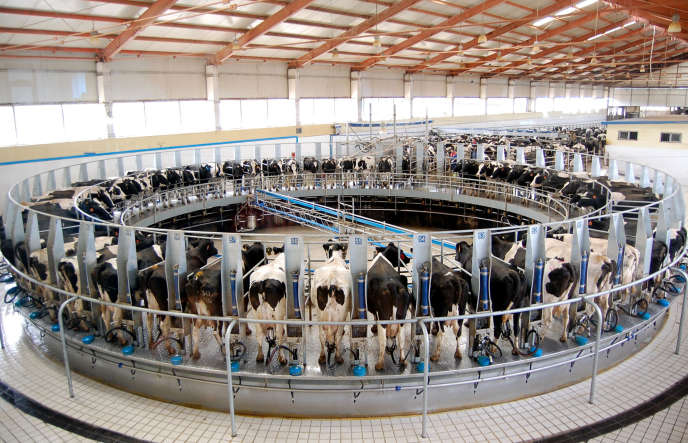 Dans un élevage laitier, au nord de la Chine