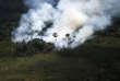 Un feu de forêt en Amazonie, dans l'Etat de Para au Brésil, le 14 octobre 2014.