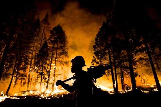 Des dizaines de millions de grands arbres dans les forêts californiennes sont menacés par la sécheresse historique qui frappe l'Etat depuis 2011.