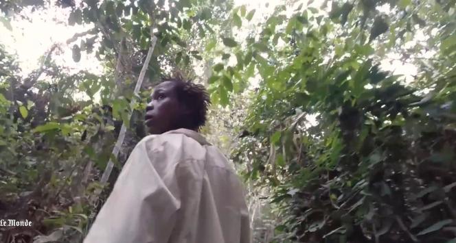 A Bayéria, les villageois se sentent abandonnés par les autorités face à l'appétit des compagnies d'exploitation forestières.