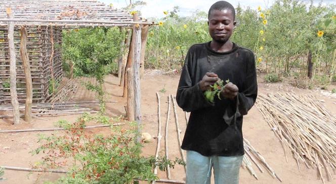 Agriculteur de Mutuali au nord du Mozambique.