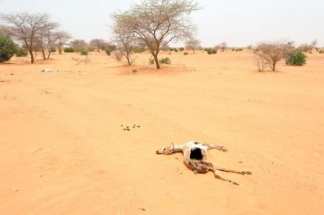 Le désert du Sahara, dans le sud-est de la Mauritanie, en 2012