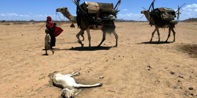Dans la région de Geladid, au sud-ouest de l'Ethiopie. après trois années de sécheresse.