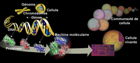 Circuit de l'ADN à la vie.