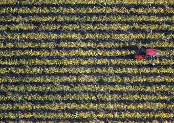 Le vignoble de puisseguin-saint-émillion, dans le bordelais.