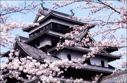 Cerisiers en fleurs à Kyoto.